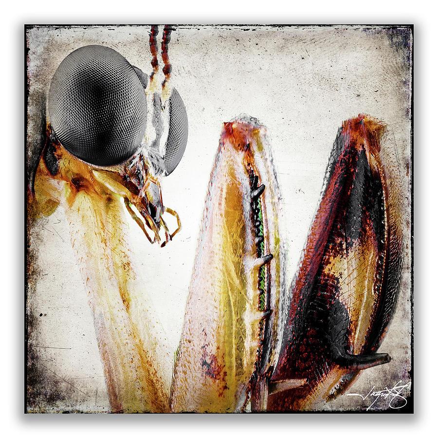 Mantidae Photograph - Mantis 11 by Ingrid Smith-Johnsen