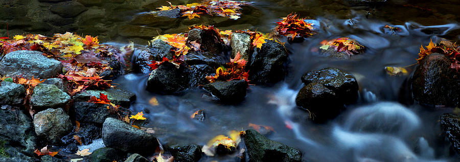 Landscape Photograph - Maple Leaves-0002 by Sean Shaw