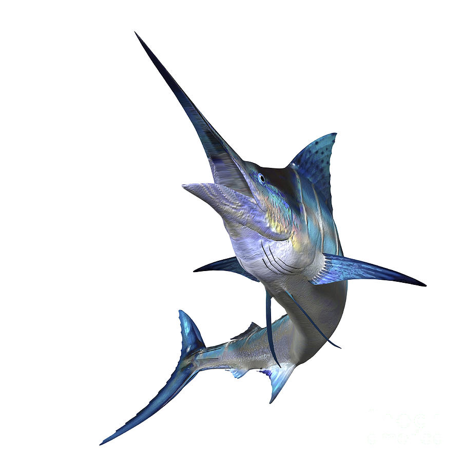 Marlin Digital Art - Marlin by Corey Ford