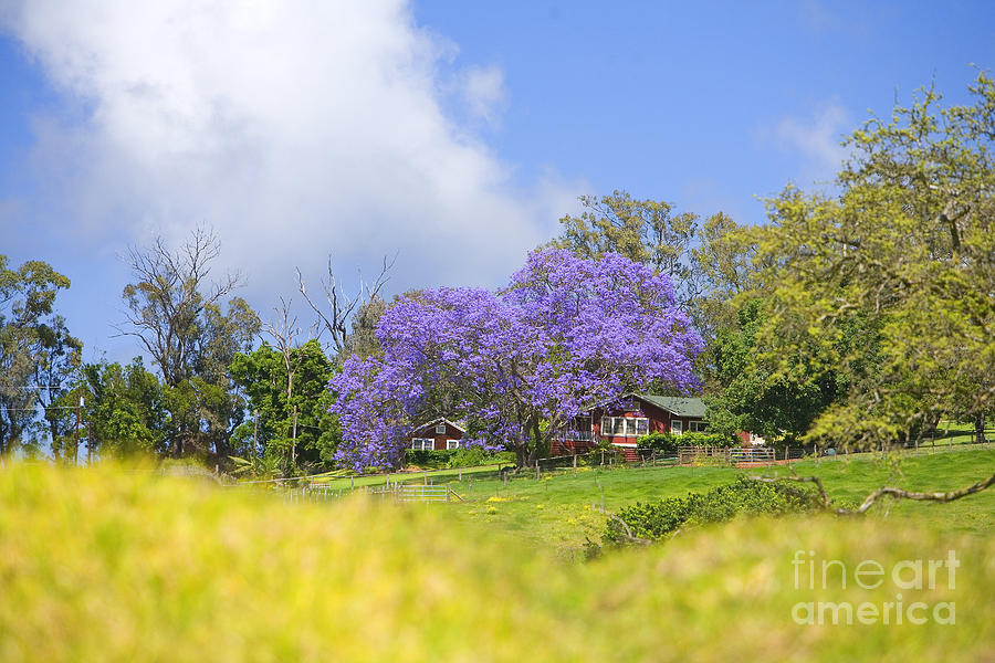 Afternoon Photograph - Maui Upcountry by Ron Dahlquist - Printscapes
