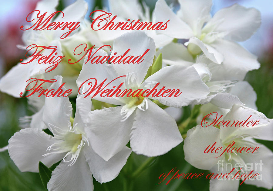 Oleander Photograph - Merry Christmas by Wilhelm Hufnagl