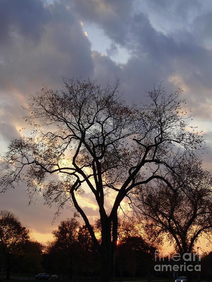 Leaves Photograph - Michigan Drama by Joseph Yarbrough