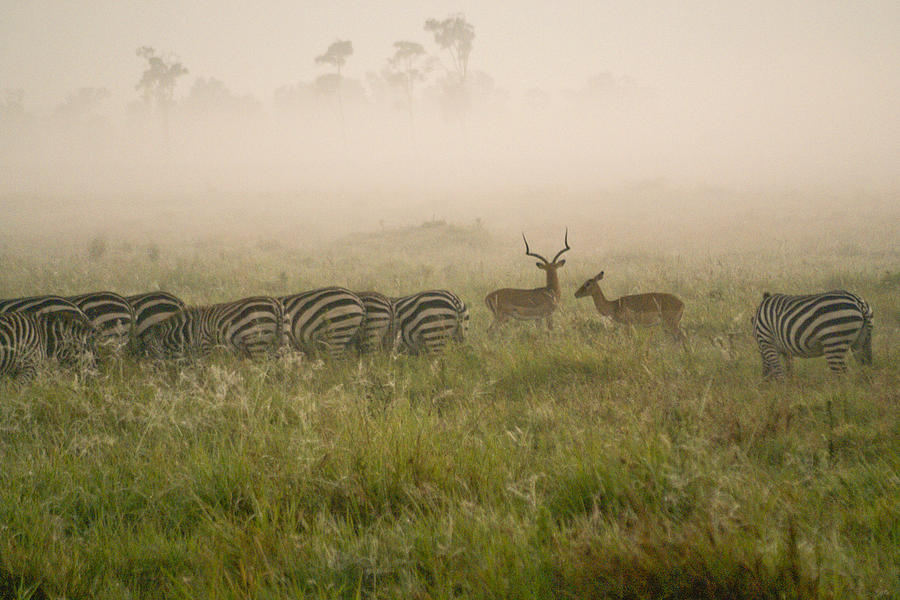 Africa Photograph - Misty Morning On The Savannah by Michele Burgess