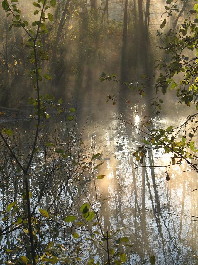 Nature Photograph - Misty Morning by Ralph Baginski