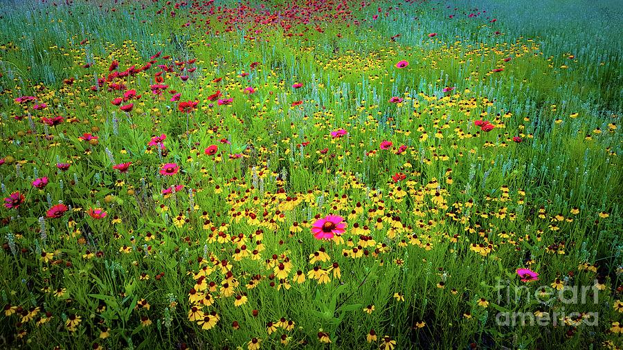 Wildflowers Photograph - Mixed Wildflowers In Bloom by D Davila