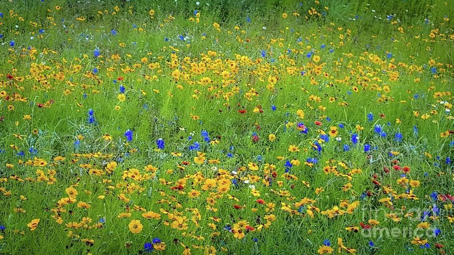 Mixed Wildflowers in Texas 538 by D Davila