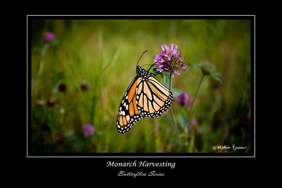 Monarch Photograph - Monarch Harvesting by Mathias Rousseau