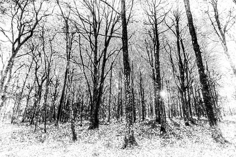 Monochrome Snow Forest Art Photograph