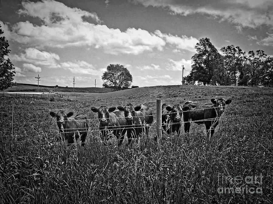 Artist Photograph - Moo by Jenness Asby