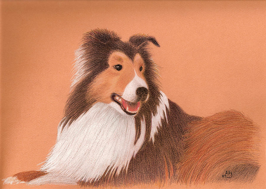 Sheltie Drawing - Morgan by Ally Benbrook