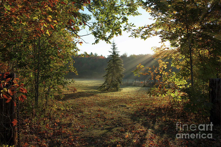 New Hampshire Landscape Photograph - Morning Stretch by Diana Nault