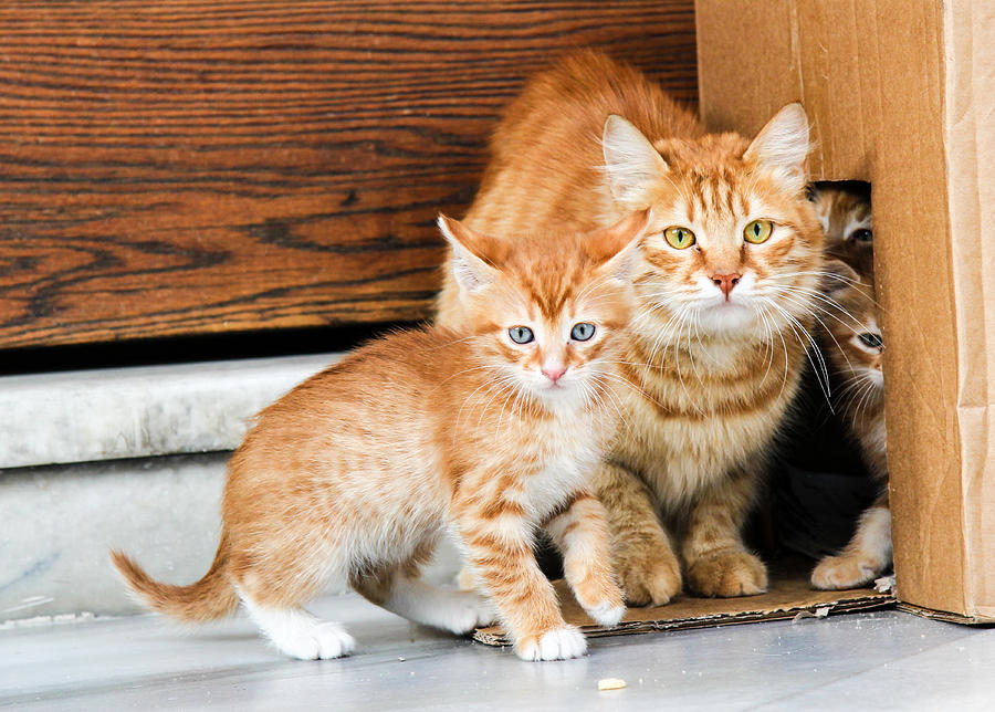 Animals Photograph - Mother And Baby Cat by Freepassenger By Ozzy CG