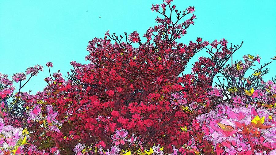 Azalea Photograph - Mountain Azalea  by Kumiko Izumi