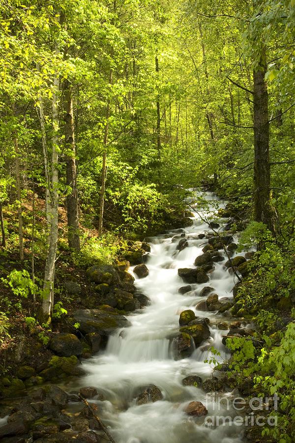 Stream Photograph - Mountain Cascade by Idaho Scenic Images Linda Lantzy
