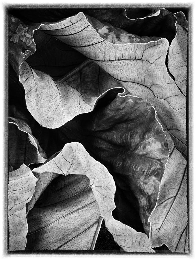 Leaves Photograph - Mounts Botanical Garden 2363 by Bob Neiman