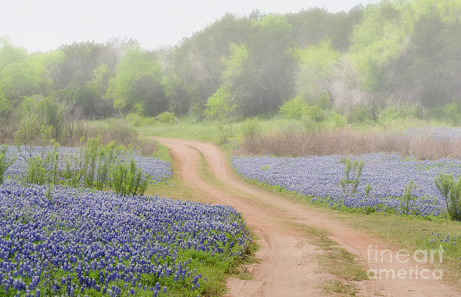 Bluebonnets Photograph - Muleshoe Bend by Darla Rae Norwood