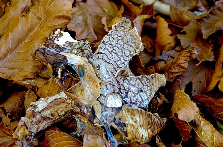 Mushrooms Photograph - Mushroom by Tilyo Rusev