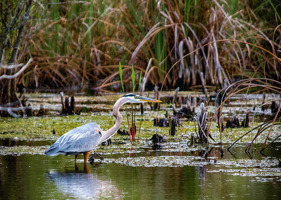 Nature Photograph - My Florida by Don Miller