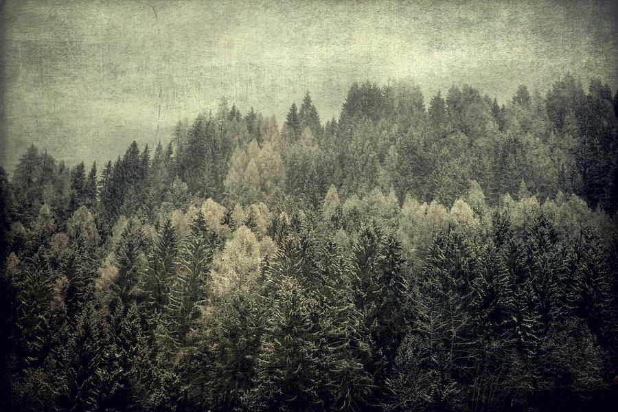 Mystic woods by Vittorio Chiampan