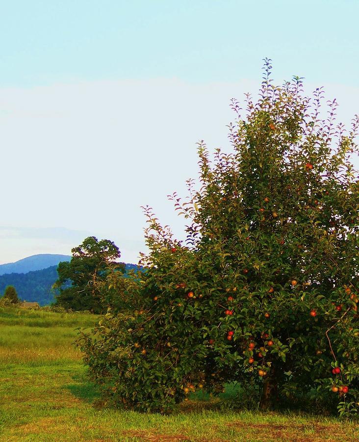 Western North Carolina Photograph - Nc Mountain Apples by Cindy Gacha