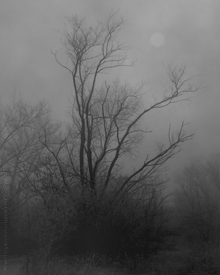 Tree Photograph - Nebelbild 13 - Fog Image 13 by Mimulux patricia No