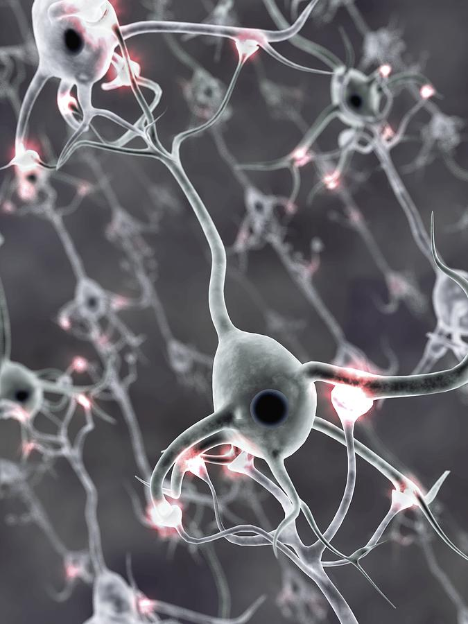 Neural Network Photograph - Neural Network, Computer Artwork by Equinox Graphics