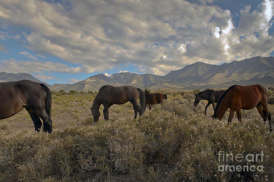 Wild Photograph - Nevada by Glenn Vidal