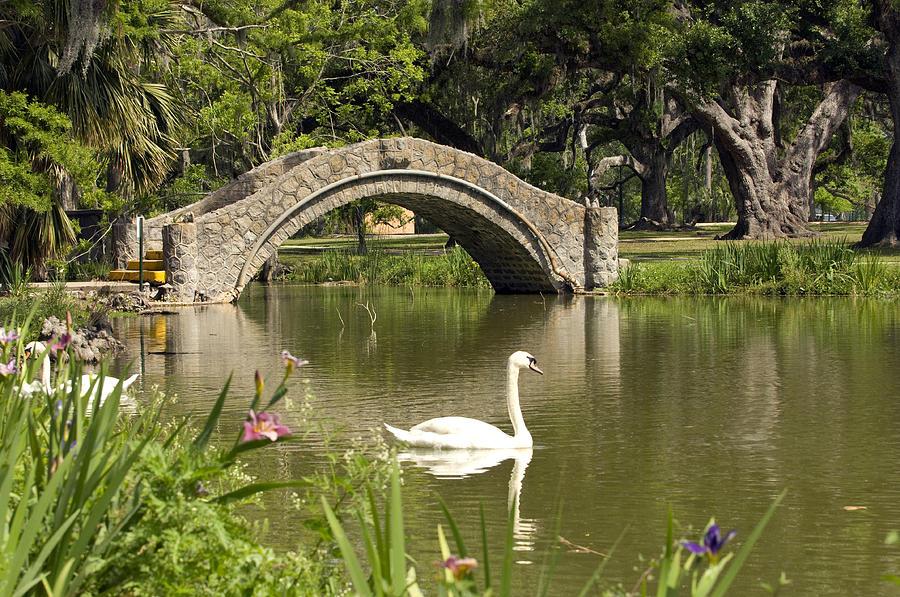 New Orleans City Park Photograph By Ellis C Baldwin