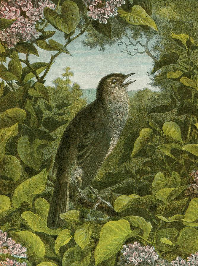 Nightingale Painting by English School