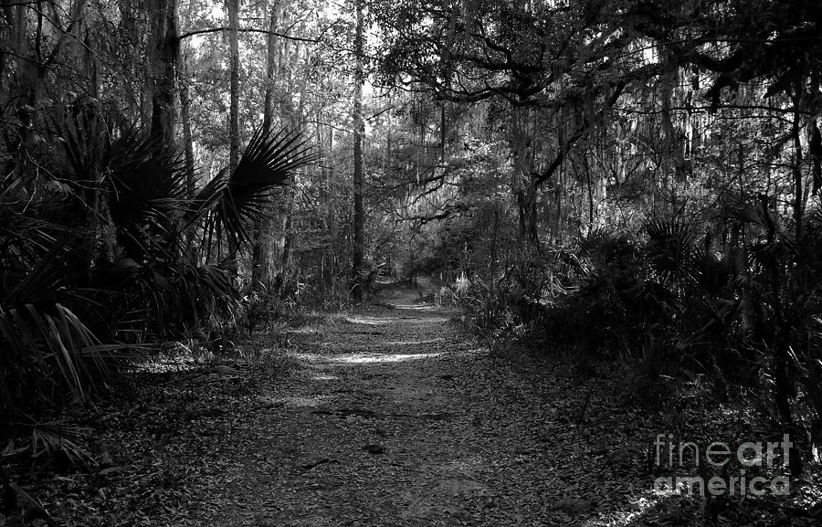Road Photograph - Old Florida by David Lee Thompson