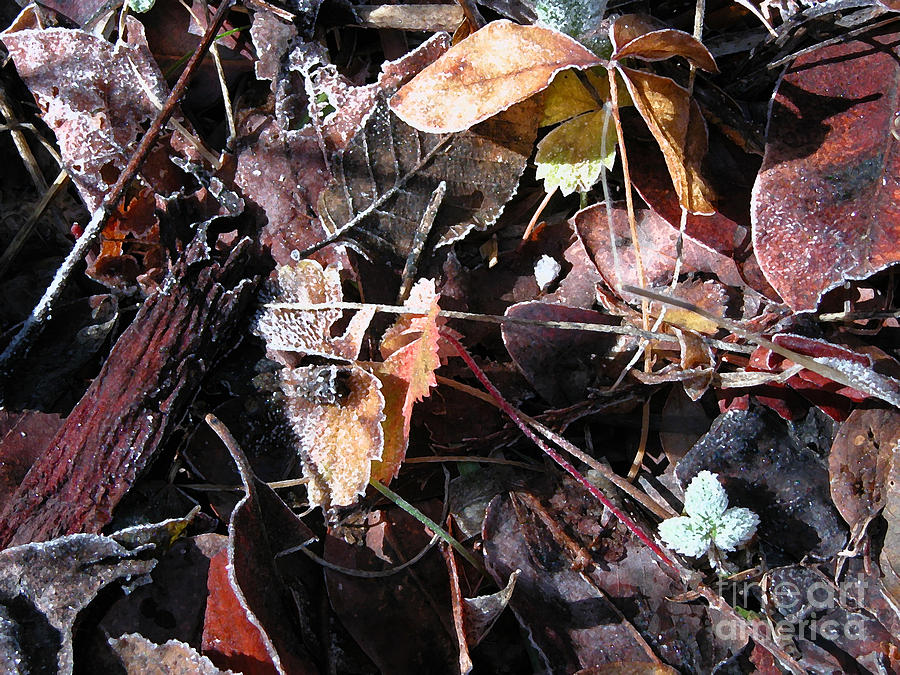 Leaves Photograph - On The Path To Loveland II by Donna Stewart