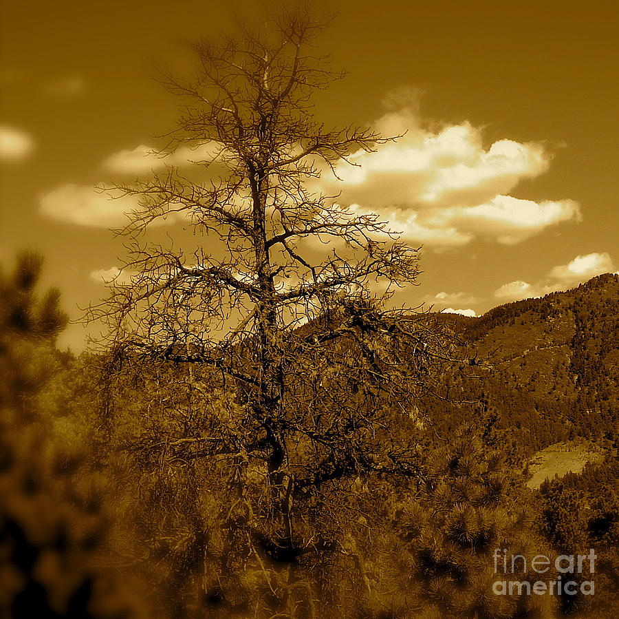 Rocky Mountains Photograph - On To Pikes Peak by Sergio Geraldes