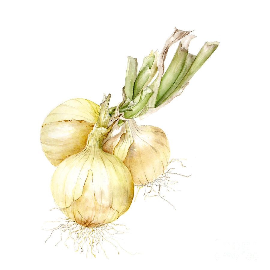 onions by Fran Henig