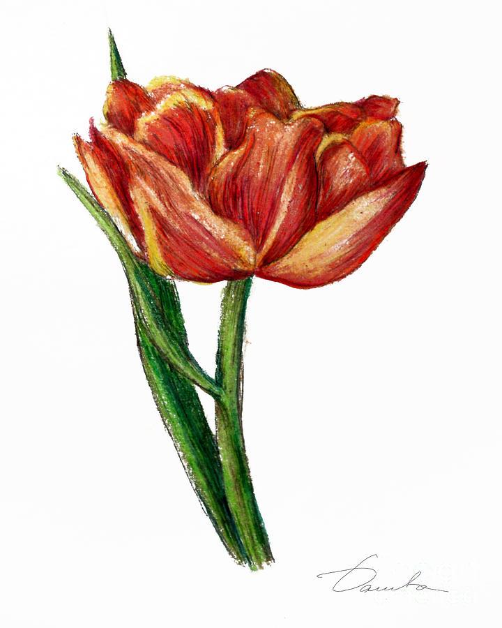 Orange Painting - Orange Tulip by Danuta Bennett