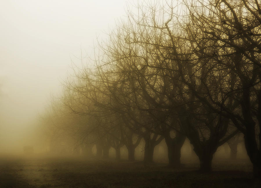 Sepia Photograph - Orchard In Fog by Rebecca Cozart