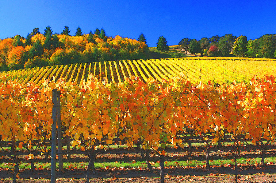 Oregon Wine Country Photograph - Oregon Wine Country by Margaret Hood