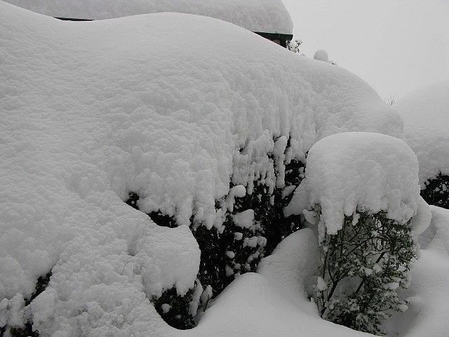 Snow Photograph - Overnight Snow by Maria Joy
