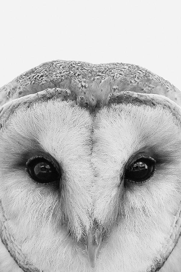 Owl by Mustapha Dazi