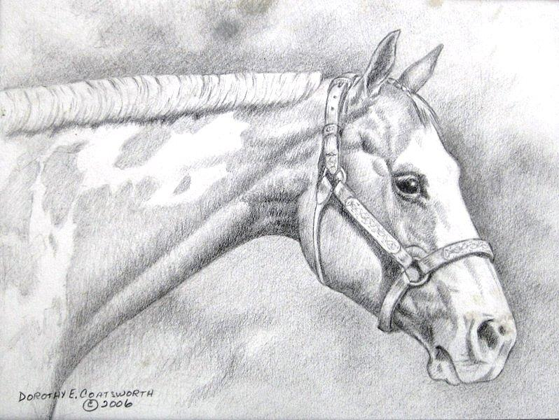 Paint Horse Drawing by Dorothy Coatsworth
