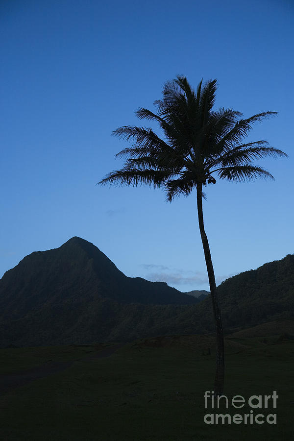 Bright Photograph - Palm And Blue Sky by Dana Edmunds - Printscapes
