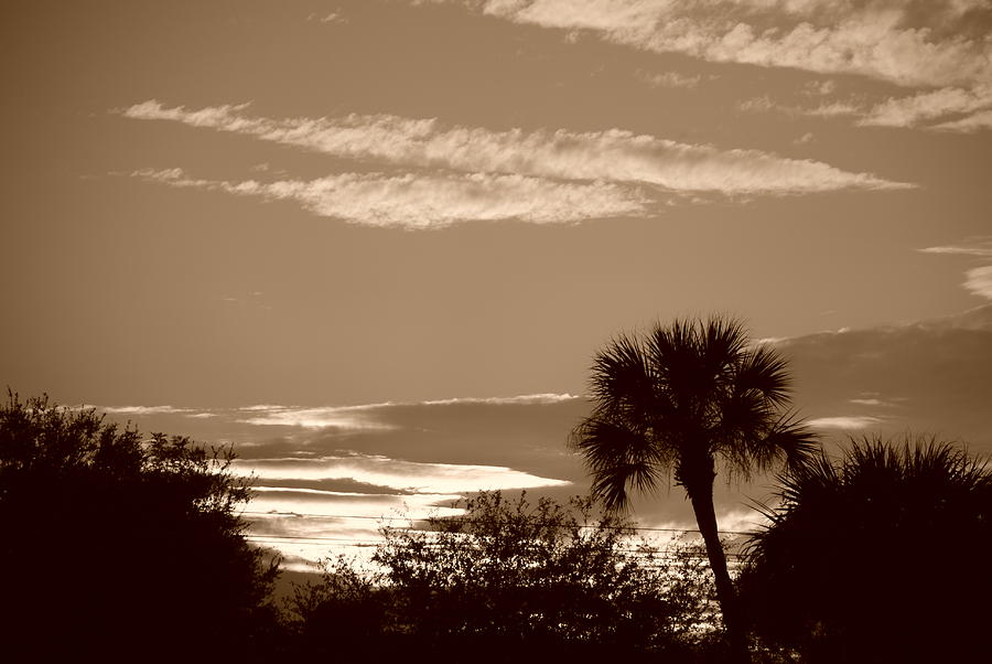 Sepia Photograph - Palms In The Clouds by Rob Hans