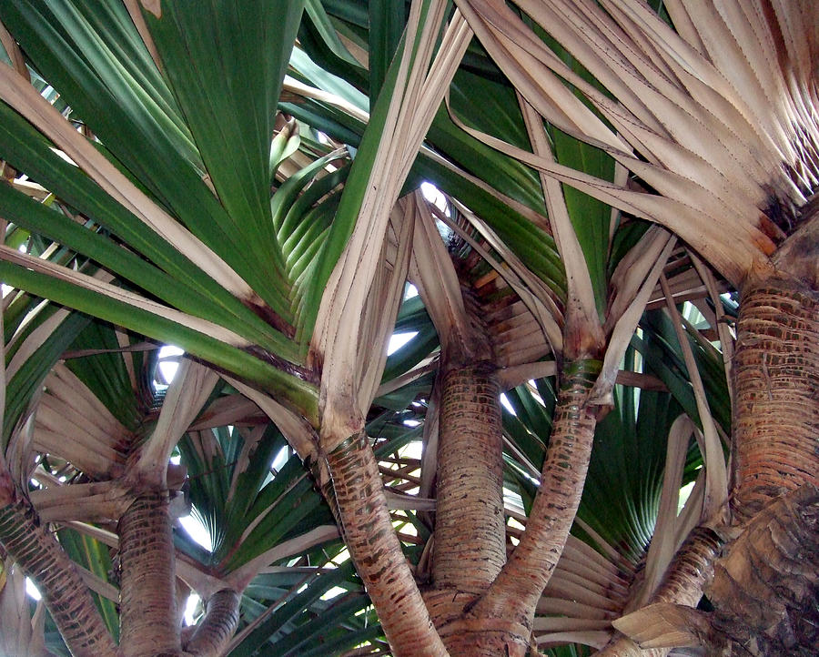 Photograph Photograph - Palms by Mindy Newman