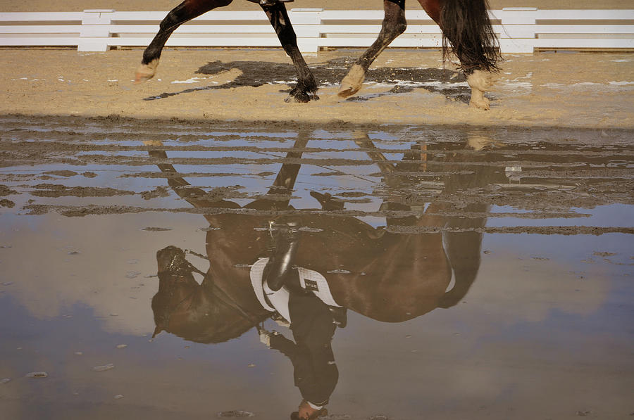 Horse Photograph - Pas De Deux Reflection by JAMART Photography