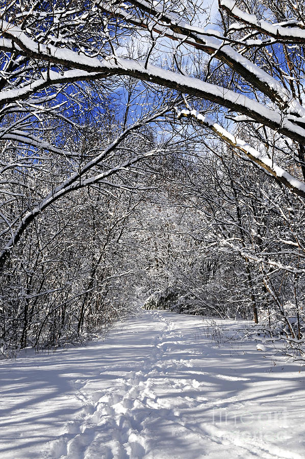 Winter Photograph - Path In Winter Forest by Elena Elisseeva