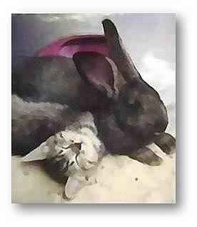 Kittens Mixed Media - Paws In The Sand by Brenda Garacci