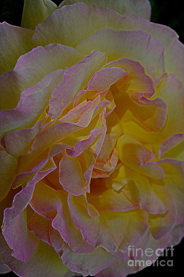 Peace by Diane montana Jansson
