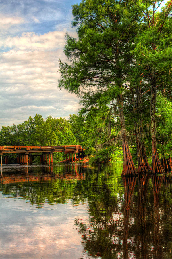 Swamp Photograph - Peaceful Afternoon by Ester McGuire
