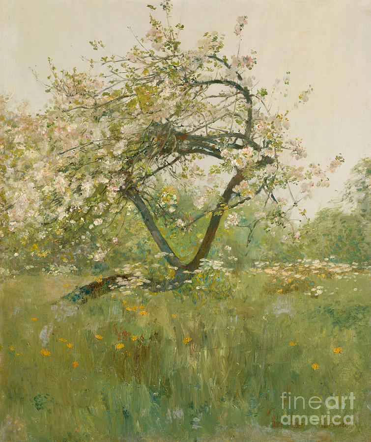 Hassam Painting - Peach Blossoms by Childe Hassam