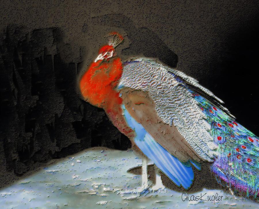 Bird Painting - Peacock II by Chuck Kugler
