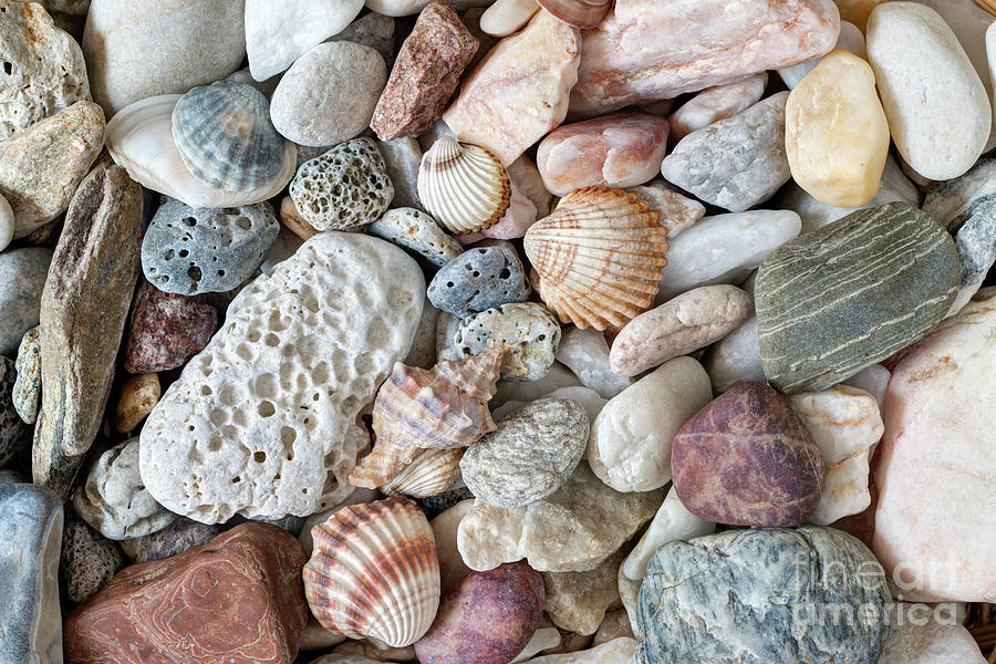 Pebble Stones And Scallops And Shells Photograph